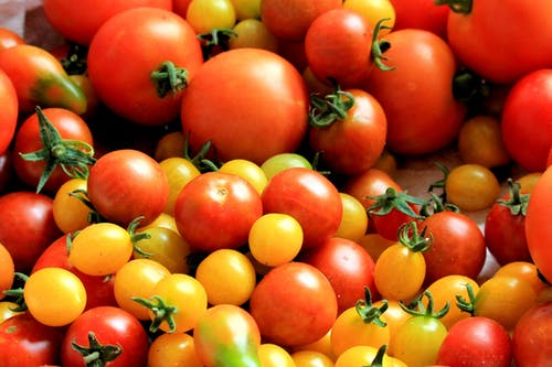 الطماطم - فوائد الطماطم الصحية و أبرز أنواعها المعروفة بالسوق